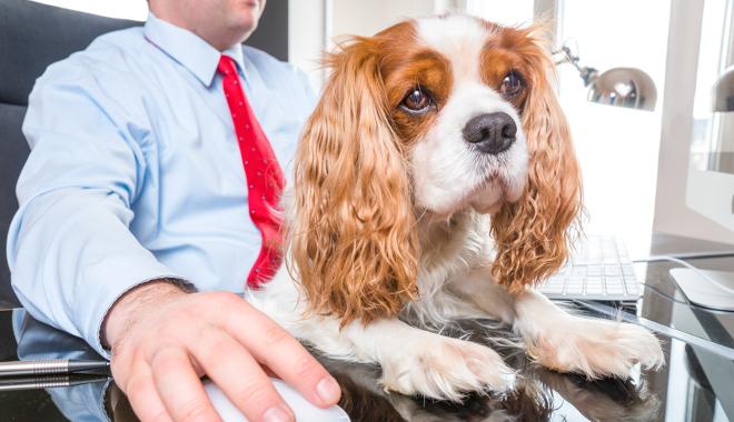 Les chiens en entreprise la nouvelle tendance QVT