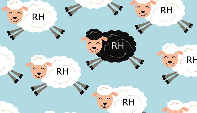 Petits moutons RH souriants