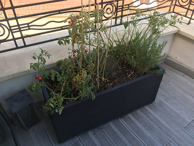 Un petit potager avec quelques tomates cerise sur la balcon de Parlons RH